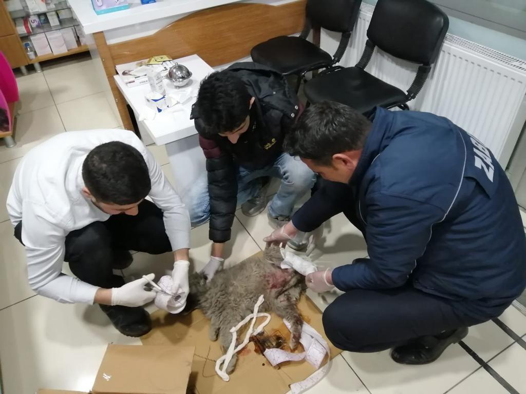 Yaralı köpeğe zabıta ekipleri sahip çıktı