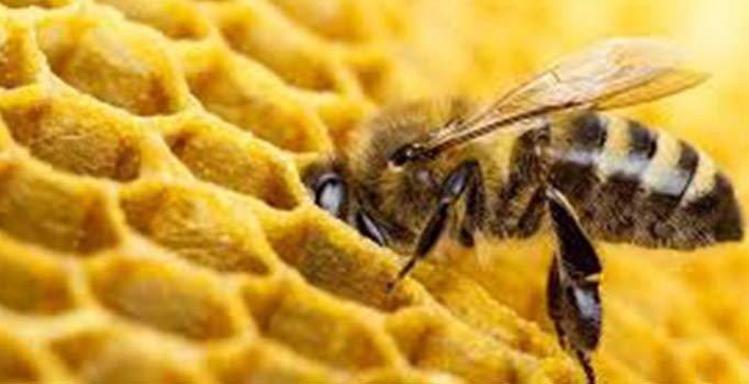 Matematik öğrenen arılar sınavdan geçti