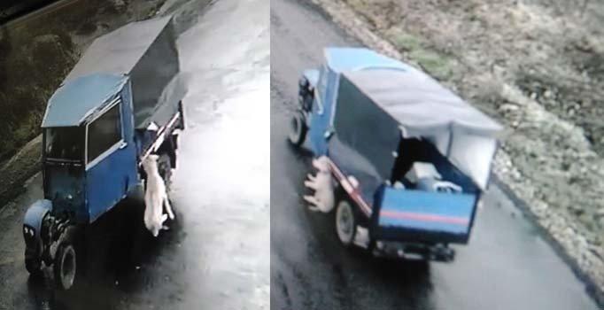 Zonguldak'ta tarım aracına bağlanan köpek sürüklenerek öldü